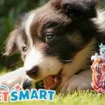 www.petsmartadoptionsurvey.com the PetSmart Charities Adoption Survey Validation Code